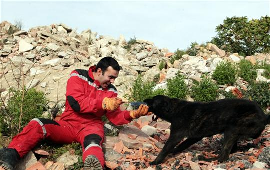 chiens-pompiers-equipe-cynophile