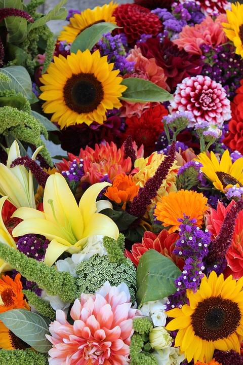 flowers-1323632_960_720