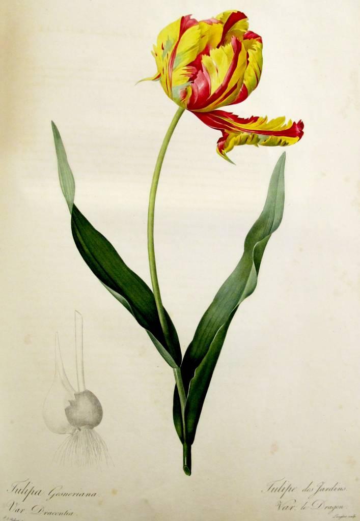 tulipe_jardins