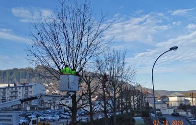 08 13 arbres elagues