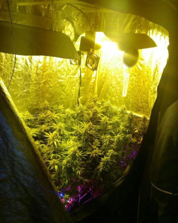 Saisie_Cannabis_02-576x1024