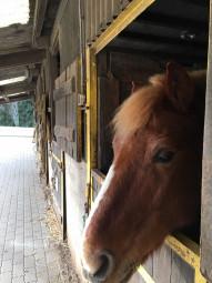 LC équitation