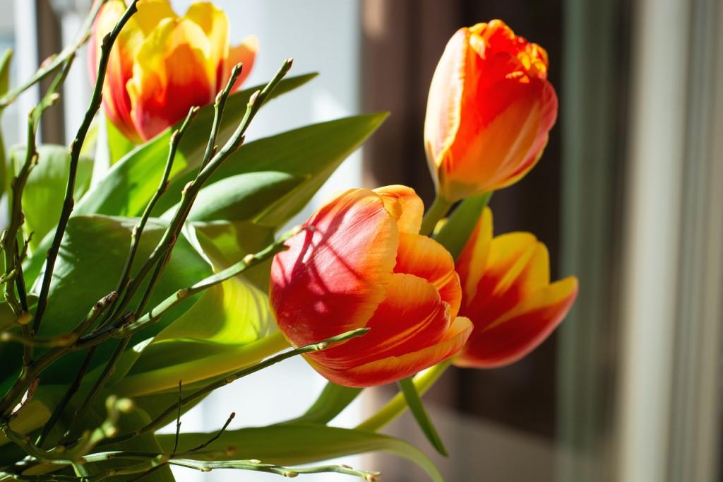 flowers-4066034_1280