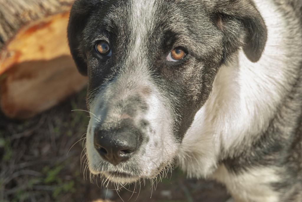 dog-3843423_1280