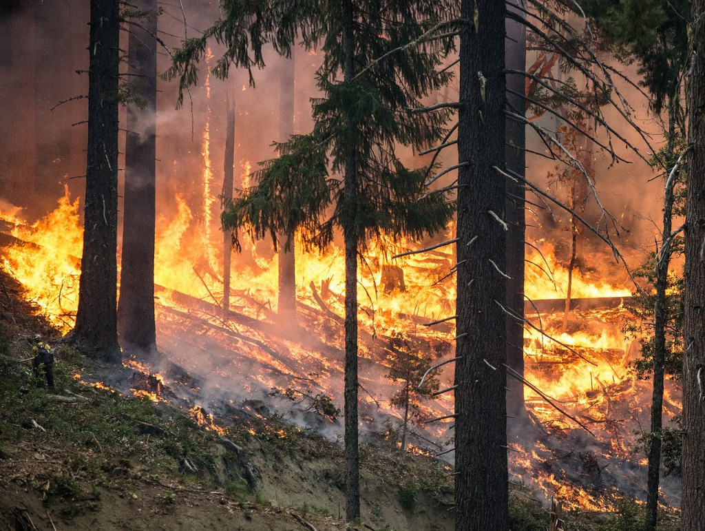 forest-fire-2268725_1280-1024x771