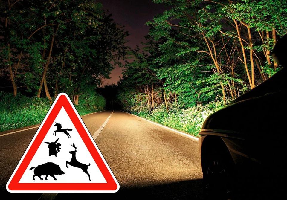accident-animal-