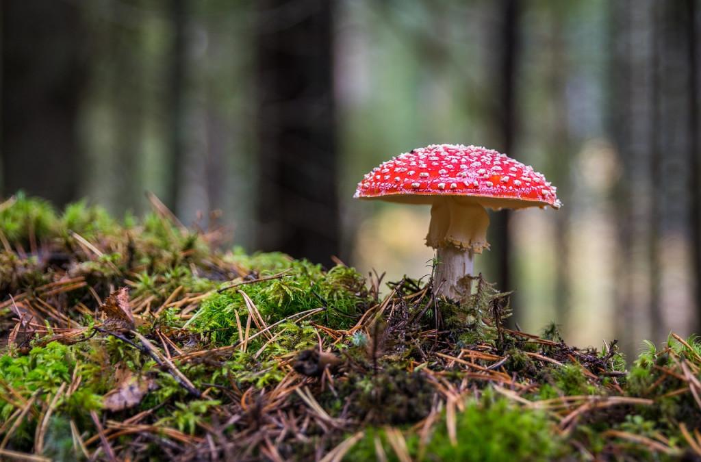 mushroom-3051519_1280