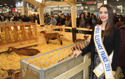 Comité Miss Elégance France