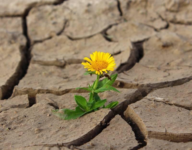 flower-887443_1920 (1)