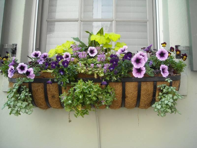 window-box-891985_1280