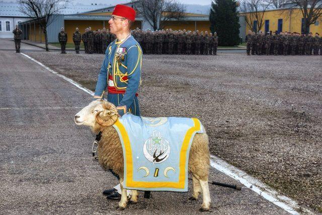 messaoud-1er-regiment-tirailleurs-Epinal