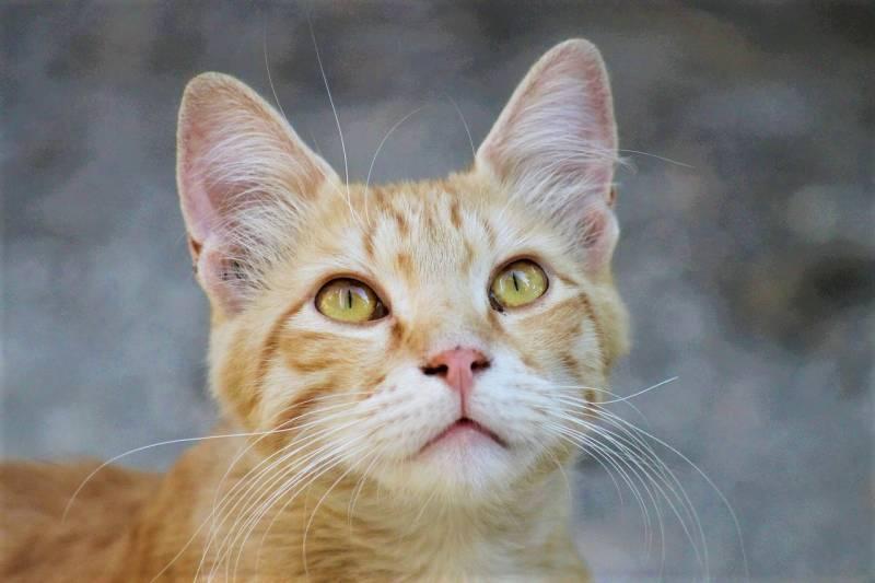 cat-5528825_1280