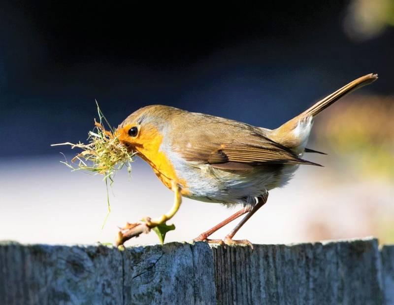 robin-redbreast-on-fence-4992622_1280