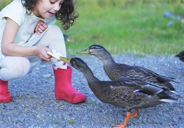 duck-4453930_960_720