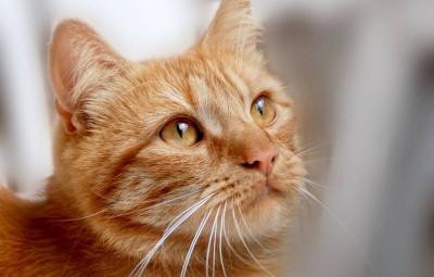 cat-5496162_960_720