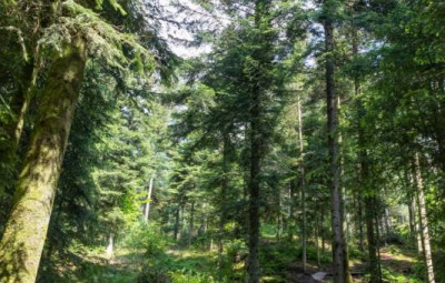 foret-epinal-400x255